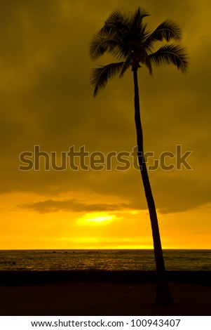 palm-silhouette at sunset