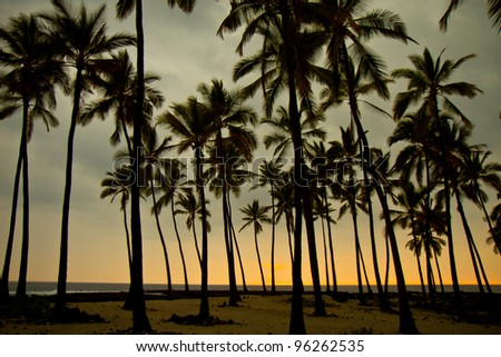 palm silhouettes at sunset