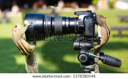 Palm squirrels staged a photo shoot. Animals and humor.