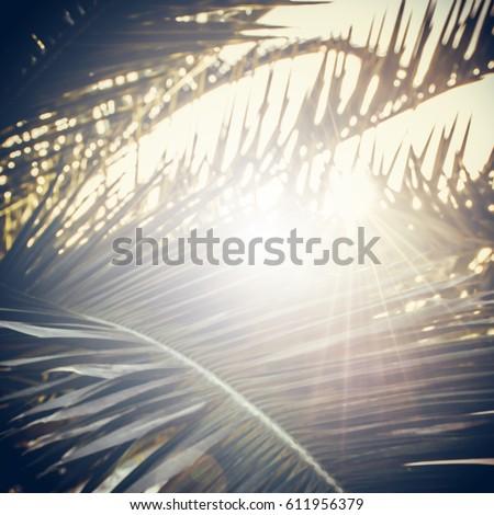 palm sunday square illustration ...
