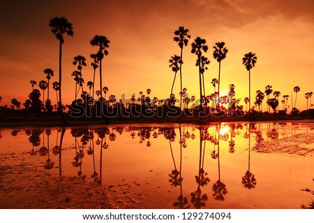 Palm sunset water reflection. - stock photo