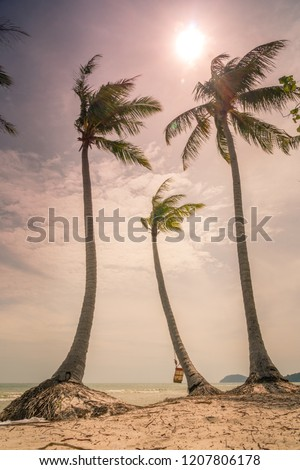 Palm tops at Sao Beach, Phu Quoc island, Vietnam, retro vintage photos with sun, clouds, moderate wind almost sunset time, empty beach, almost no people, sand, beach plank bed