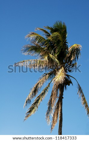 Palm tree against blue sky background