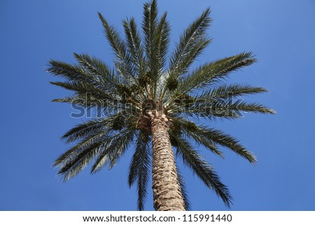 Palm tree against the sky - stock photo