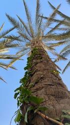 Palm tree. Amazing nature.