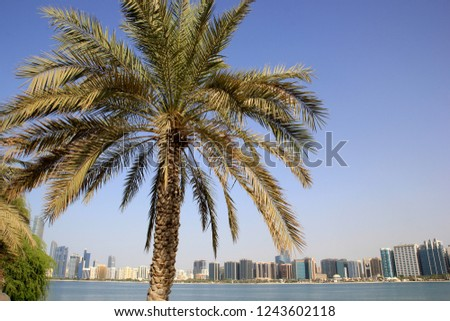 Palm tree and Abu Dhabi City - view from the beach