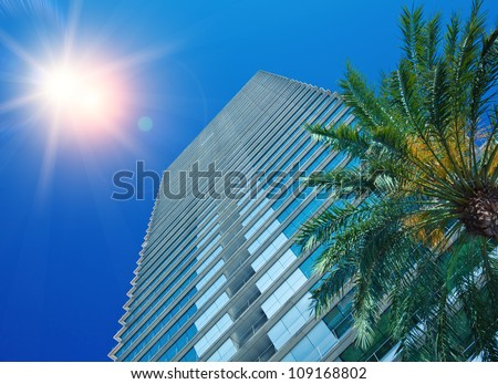 Palm Tree and Office Building under the sun