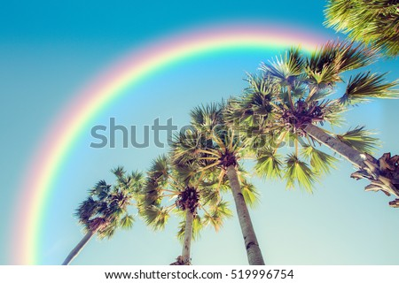 Palm tree and rainbow  #519996754