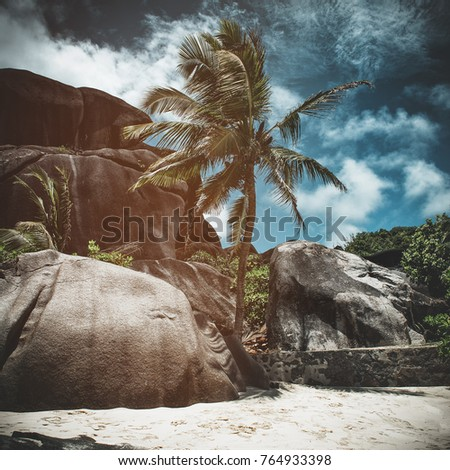 Palm tree and rocks on a tropical beach with toning and vignette giving an artistic storm effect in a square format