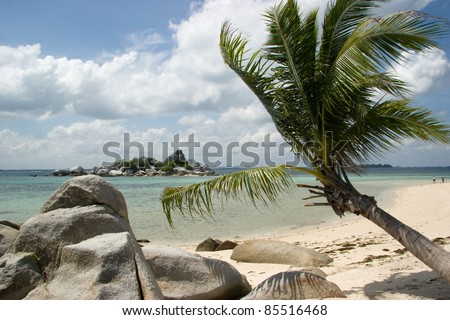 Palm tree and rocks on the beach