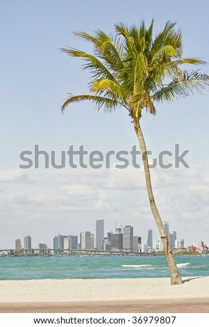 florida beaches with palm trees. florida beaches with palm
