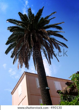 Palm tree and the house in Montenegro
