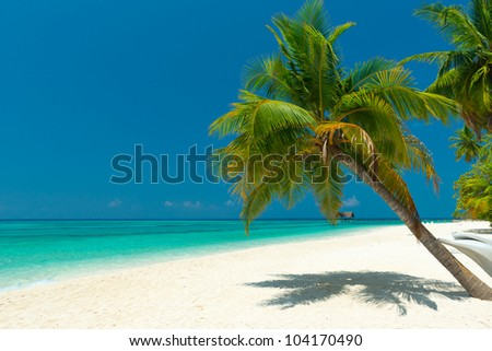 palm tree at a beautiful unspoilt beach