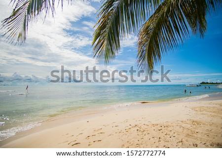 Palm Tree at Perfect Beach at Caribbean Sea