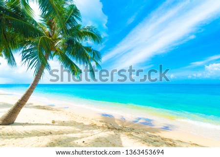 Palm tree at the Beach #1363453694