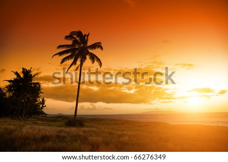 Palm tree at the ocean in Hawaii