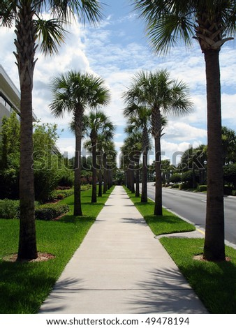 Palm tree avenue