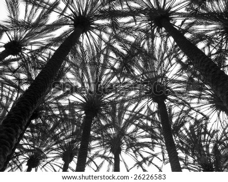 Palm Trees Background Black And White Palm Tree Background Black