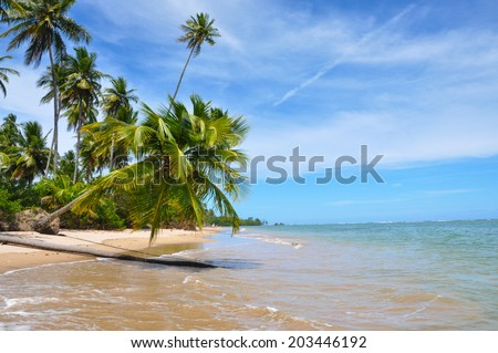 Palm Tree Blue Lonely Beach Brazil Salvador Bahia Beautiful Adventure