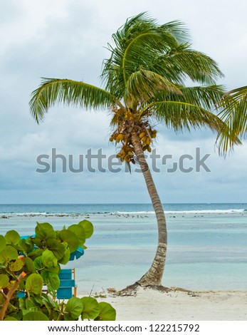 Palm tree by the ocean