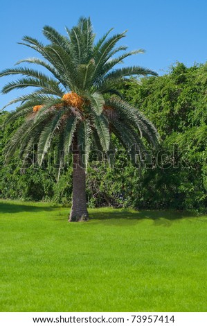 Palm tree for many people a symbol of tropics, subtropics - a happy place on the earth, a resort. #73957414