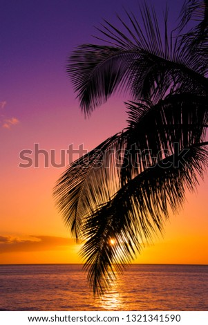 Palm Tree frond in the sunset dipping into the ocean in Maui Hawaii. #1321341590