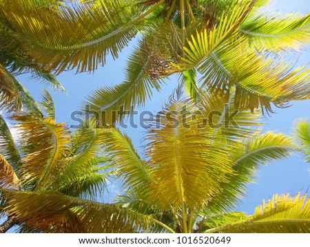 Palm Tree Fronds - Shutterstock ID 1016520649
