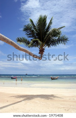 Palm tree growing out onto tropical beach