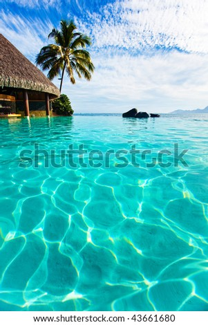 Palm tree hanging over infinity pool and ocean