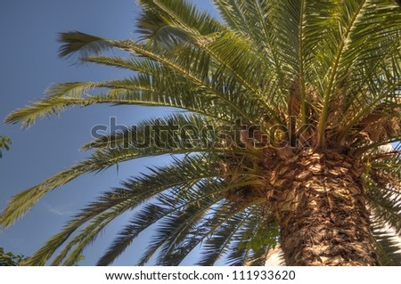 Palm tree, HDR photo.