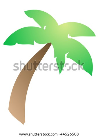 Palm tree - Highly detailed and colored illustration