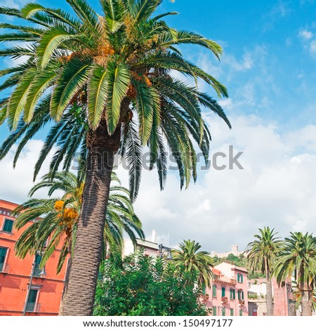 palm tree in Bosa main square
