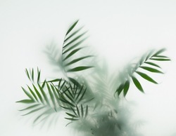 palm tree in fog, selective focus