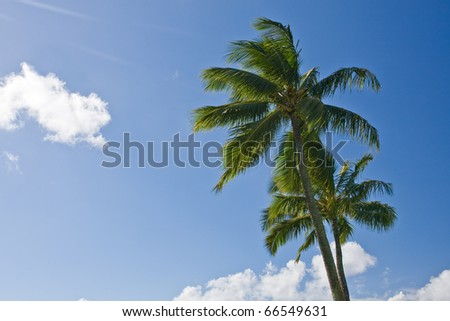 Palm tree in front of blue sky with clouds