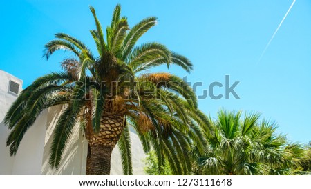 palm tree in resort city, salou spain, travel background with copy space copy space