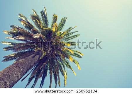 Palm tree in retro style, Orange county, California.