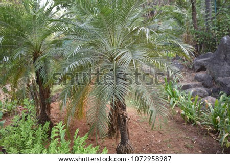 Palm tree in Rock Garden Nerul India. Photo taken by April 18, 2018 at 17.50