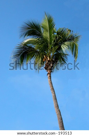 palm tree in the florida sky