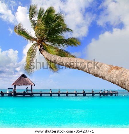 Palm tree in tropical perfect beach at Cancun [Photo Illustration]