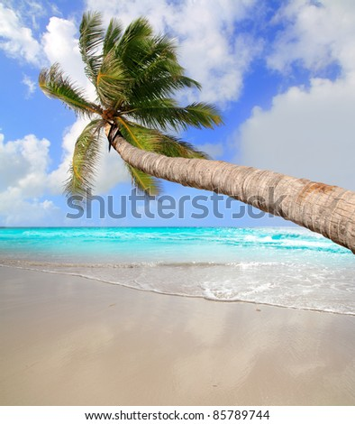 Palm tree in tropical perfect beach at Caribbean sea [Photo Illustration]
