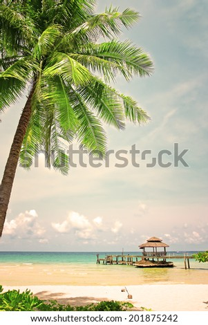 palm tree in tropical perfect...