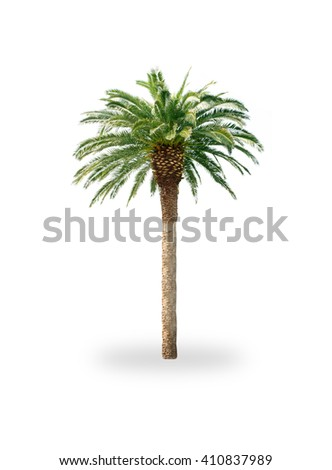 Palm tree isolated on white - Shutterstock ID 410837989