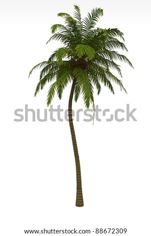 palm-tree isolated on white