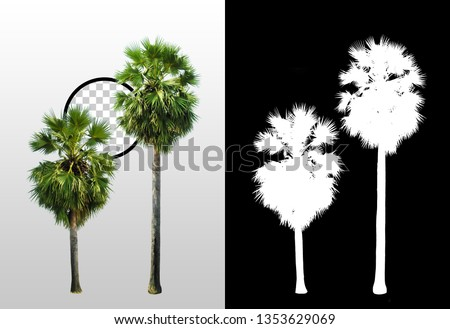 Palm tree isolated on white background with high quality mask alpha channel and clipping path. Can used in architectural design or Decoration work. Suitable for natural articles fine print / web page #1353629069