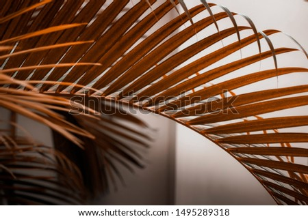 Palm tree leaves against white wall. Autumn warm earthy tones brown dark orange colors, creative colorful minimalism. Horizontal