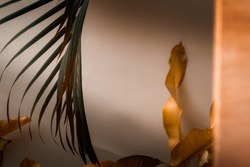 Palm tree leaves against white wall. Autumn warm earthy tones brown orange and dark green colors, creative colorful minimalism. Horizontal
