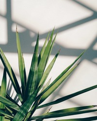 Palm tree leaves and shadows in the sun.