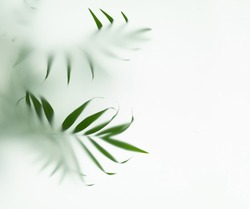 palm tree leaves in fog, selective focus