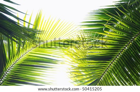 Palm tree leaves in various green tones and shades