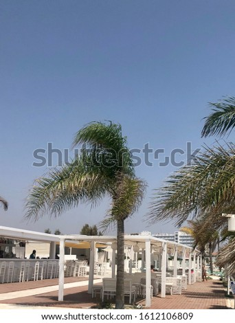 Palm tree leaves on blue sky.Windy day.Cyprus